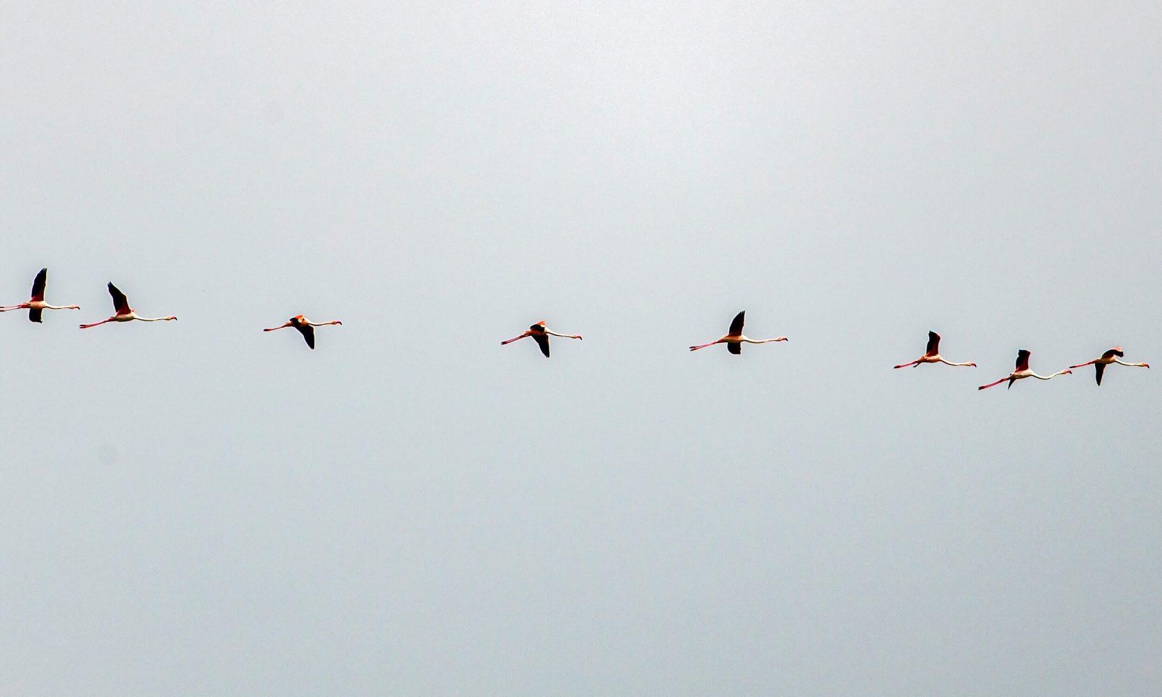 flamingo formation in sky
