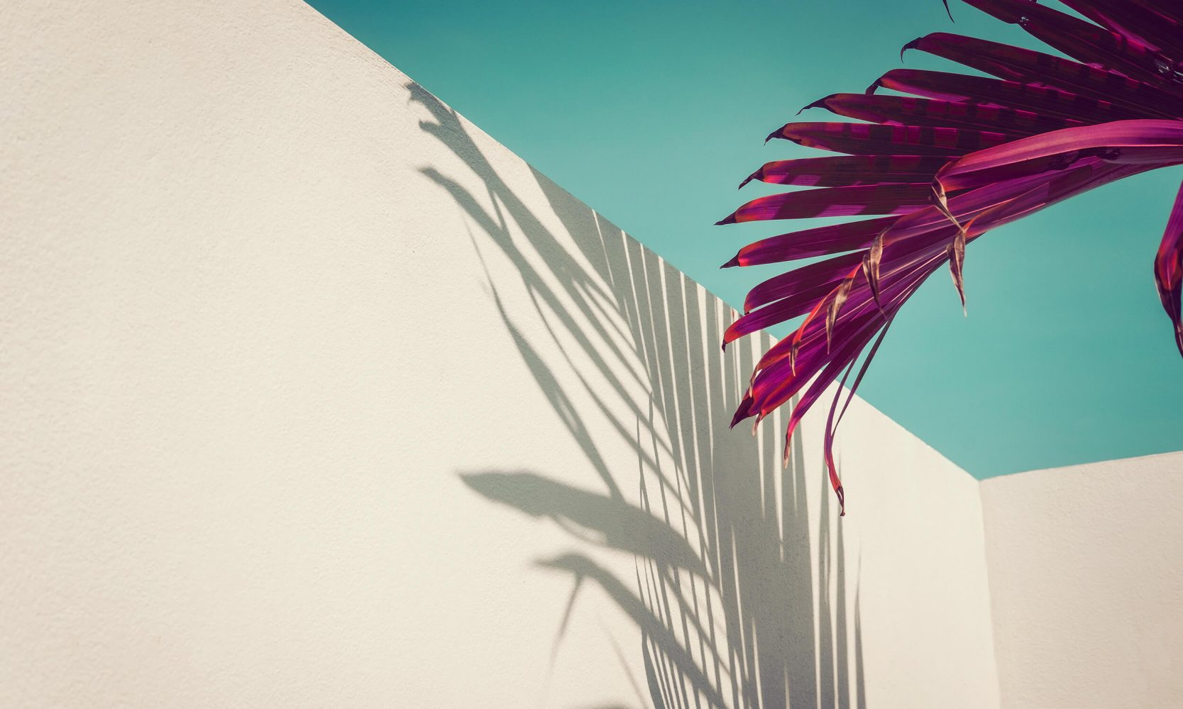 tropical leaf shadow on wall